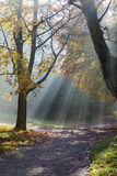 Morning sun rays shining in the autumn forest Stock Photo