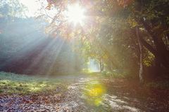 Morning sun rays shining in the autumn forest Royalty Free Stock Images