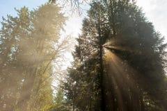 Morning Sun Rays Through the Trees Royalty Free Stock Photos