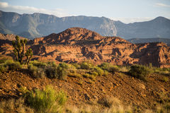 Morning sun on red rock desert scene with Joshua tree Royalty Free Stock Images