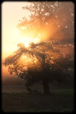 Morning sun Royalty Free Stock Images