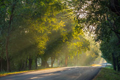 Morning sun shining on the country road. Stock Photography