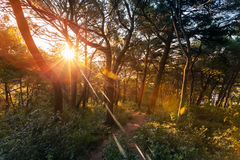 Morning sun is shining in the dark forest Stock Photos