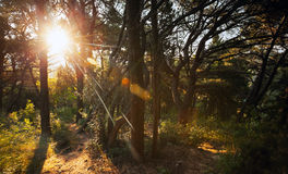 Morning sun is shining in the forest Royalty Free Stock Photography