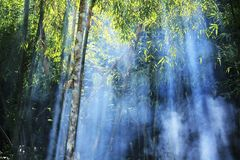 The light through the smoke in the bamboo. royalty free stock photo