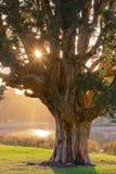 Morning sun shining through trees Stock Image