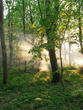 Morning sun. Stock Images
