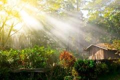 Morning sun Royalty Free Stock Photos