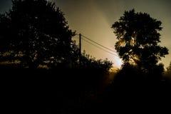 Morning sun through the trees Stock Photos