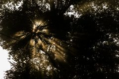 Morning sun through the trees Stock Images