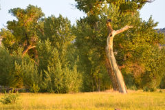 Morning Sun On Trees In Summer Royalty Free Stock Photos