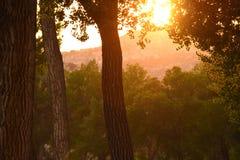 Morning Sun Through Trees In Summer Royalty Free Stock Photos