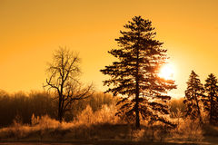 Morning sun in winter time Stock Images