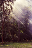 Morning sunbeam in forest with smoke Royalty Free Stock Photos