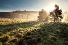 Morning sunbeams begind trees. In fog Royalty Free Stock Image