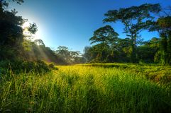 Morning sunbeams in nature landscape Royalty Free Stock Image