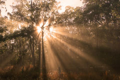 Morning Sunlight Stock Photography