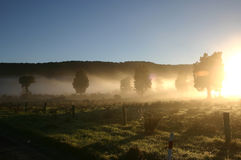 Morning Sunlight and the Autumn Fog Royalty Free Stock Photos