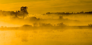 Morning Sunlight Bathes the Marsh Stock Photo