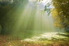 Morning sunlight breaking through the fog. In an autumn park Stock Photos