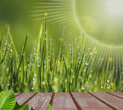 Morning sunlight catches shining dewdrops on the grass Stock Photos