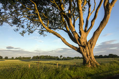 Morning sunlight in County Antrim - Northern Ireland. Early morning sunlight on trees and fields in rural Ireland - County Antrim in Northern Ireland stock image