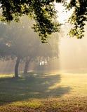 Morning sunlight falls . Forest ,morning sunlight falls Royalty Free Stock Images