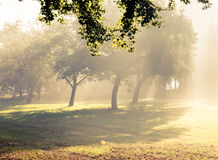 Morning sunlight falls . Stock Photography