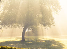 Morning sunlight falls . Royalty Free Stock Photography