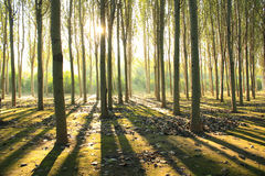 Morning sunlight. Falls on an forest Stock Photography