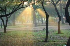 Morning sunlight Stock Photos