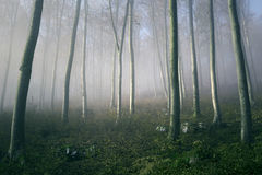 Morning sunlight in the foggy forest Royalty Free Stock Photography
