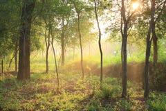 Morning sunlight Royalty Free Stock Photo