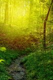 Morning sunlight in the forest. Essen, Germany Stock Photo
