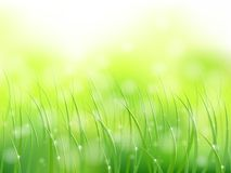 Morning sunlight grass early dew softfocus pattern Royalty Free Stock Photo