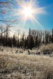 Morning sunlight in grass in hoar frost covered forest Royalty Free Stock Photos