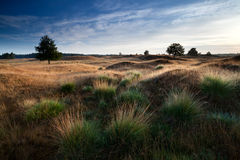 Morning sunlight through hills. And dunes, Drents-Friese wold, Netherlands Royalty Free Stock Photos