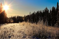 Morning sunlight in a hoar frost covered forest Royalty Free Stock Photo