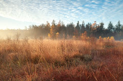 Morning sunlight and mist during autumn indian summer Royalty Free Stock Photos