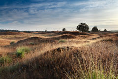 Morning sunlight over dunes Royalty Free Stock Images