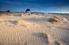 Morning sunlight over sand dunes Royalty Free Stock Photo