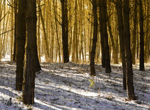 Morning sunlight and shadows in the forest Stock Images