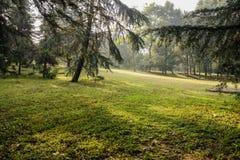Morning sunlight on shady hillside lawn Stock Photos