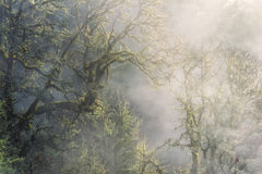 Morning Sunlight Shines on Winter Fog In Forest Stock Images
