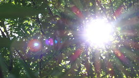 Morning Sunlight Shining and Peaings Through Tree Branches. Morning Sunlight Shining and Peaking Through Tree Branches and Leaves in Forest, Camera Movement stock footage