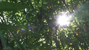 Morning Sunlight Shining Through Tree Branches stock video footage