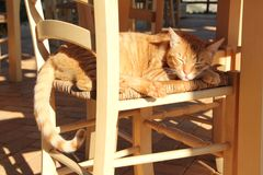 A morning sunlight on the sleeping red cat. Cute red-white cat basking in the sun on the wicker wooden chair royalty free stock photography