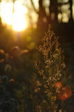 Morning Sunlight through Thin Branchs of a Plant Stock Photography