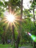 Morning sunlight. Throug the tree in the park Stock Photos