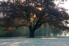 Morning sunlight through the   tree Royalty Free Stock Images